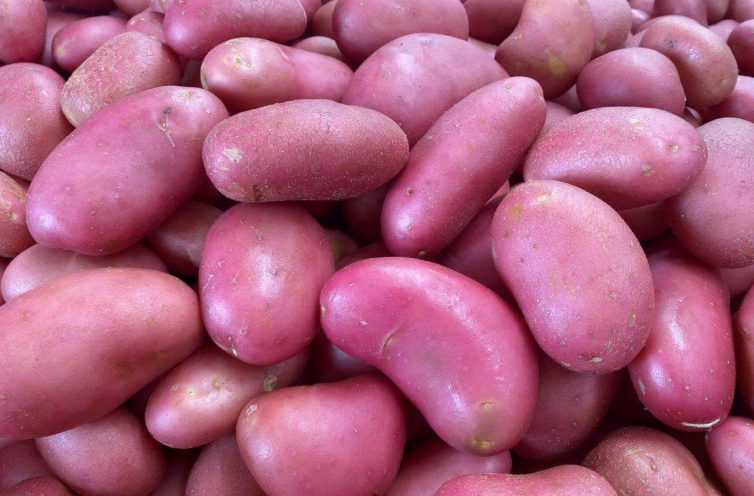 תפוחי אדמה בתפזורת צילום יובל לוטרינגר